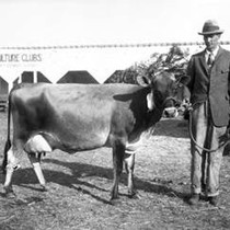 Fifth Western Sonoma-Marin Dairy Cattle Show in Valley Ford, Sonoma County, August ...