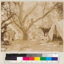 Camping group with trees and horse