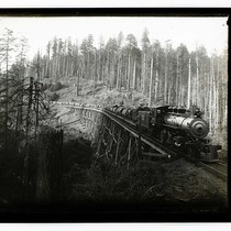 Among th Humboldt Redwoods [Train of logs - Luffenholtz trestle/unknown]