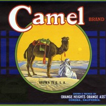 "Crate label, ""Camel Brand."" Orange Heights Orange Assn"