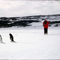 Adelie penguins, McMurdo Station, Antarctica