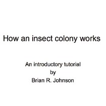 How a Social Insect Colony Works