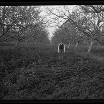 Child Standing in Between Two Parallel Rows of Walnut Trees