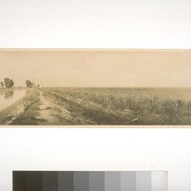 Main irrigation canal and rice field, Fair Ranch, Knights Landing, 1916