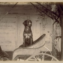 [Dog in carriage]