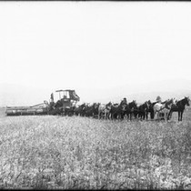 24-horse harvester in the field, Hemet, Riverside County, ca.1890-1900