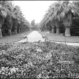 View of the flowers and palm trees in Eastlake Park (later known ...