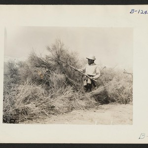 Manzanar, Calif.--Clearing brush from land at reception center for evacuees of Japanese ...