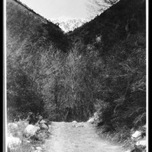 View of snow-capped Mount Baldy in San Bernardino County, ca.1900