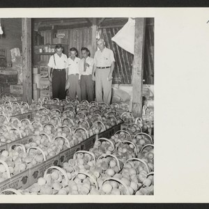 Alvin O. Eckert, right, grower of choice peaches near Bellville, Illinois, shows ...