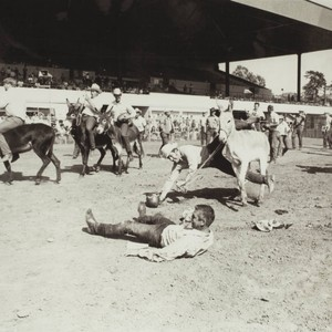 Donkey Watermelon Race on Farmers Day at the racetrack at the Sonoma ...