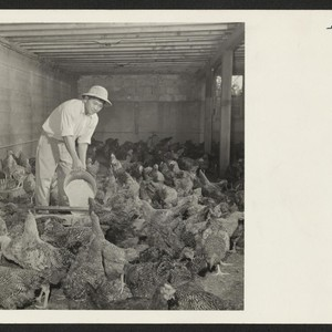 Harvey Suzuki is manager of the poultry farm of L. L. Logan ...