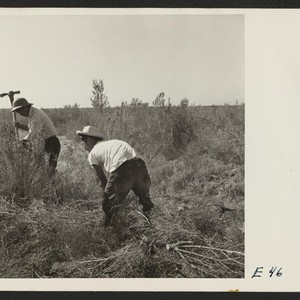 Volunteer farm workers swing grubbing axes in clearing the farm land at ...