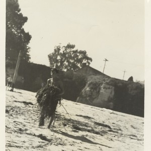 Harry Murray carrying kelp at Cowell Beach
