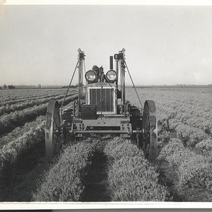Guayule Project, Williams Road, Salinas, CA, LH Ph., Negative 430, ©1940s Salinas ...