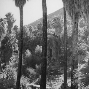 Palm Canyon area
