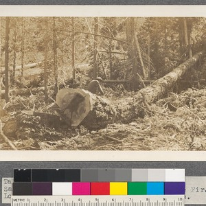 Tahoe sales, 1914. Sierra Nevada Wood and Lumber Company. Sanitation clause study. ...