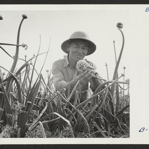 S. Hanasaki, former vegetable seed specialist from San Jose, California, where he ...