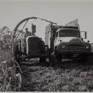 Harvest time on St. Anthony's Farm #4, 11207 Valley Ford Road, Petaluma, ...