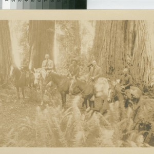 [Scene in timberland of the Little River Redwood Co., Crannell California, September ...