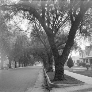 Residential neighborhood, Pasadena
