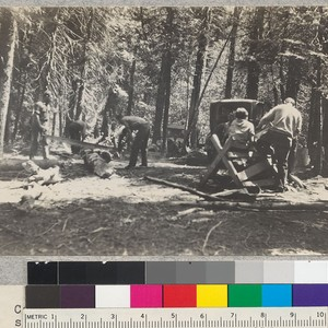 Camp Califorest. A group just returned from side-camp cutting alder wood for ...