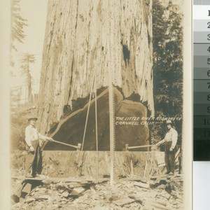 Little River Redwood Co., Crannell, Calif. [promotional photograph with loggers, tools and ...