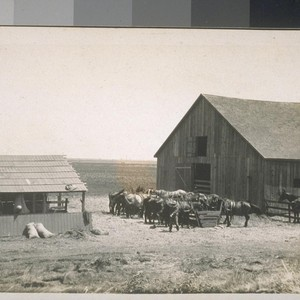 San Joaquin River Island Ranch. 1909