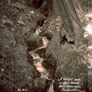A stream in Muir Woods, 1933 [postcard negative]