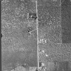 Orchards on Foreman Lane between Goode and Skinner Roads--aerial views