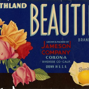 "Crate label, ""Southland Beauties Brand."" Grown and Packed by Jameson Company, Corona, ..."