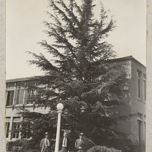 Osterman, Cory and Scherman with a nice Deodar Cedar at corner of ...