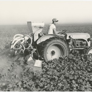 Calisphere: [Side view of man driving tractor affixed with