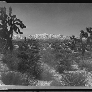 Antelope Valley and Joshua trees, [1920-1939?]