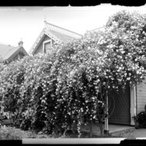 Rose-covered cottage in South Pasadena