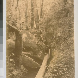 A Trip to the Gorge, Boulder Creek, Santa Cruz Mountains, July 1887
