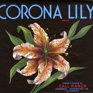 "Crate label, ""Corona Lily Brand."" Grown and packed by Call Ranch. Corona, ..."