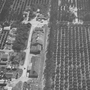 McPherson Heights Citrus Association packing house, Orange, California, 1944