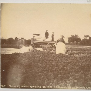 View of drying ground on W.J. Fosgate's seed ranch, Santa Clara, California. ...