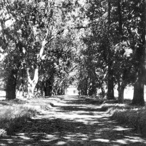Grounds of Bidwell Mansion