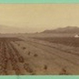 [View of crops]