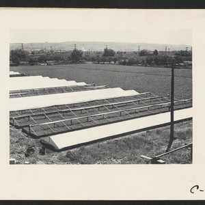 Hayward, Calif. (Hesperian Blvd.)--A portion of Negi leased farm as seen from ...