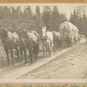 An Old time jerk line freight team, hauling freight from Truckee, Calif. ...
