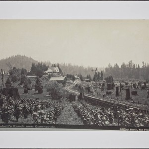 Korbell's Ranch near Guerneville, California, about 1905