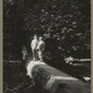 [Alfred Fuhrman and man standing on fallen tree in Muir Woods]