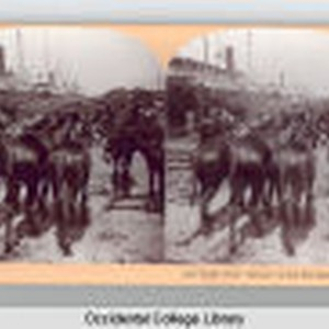 "9246-Some of our ""Heroes"" of the War Bound for Cuba Copyright, 1898, ..."