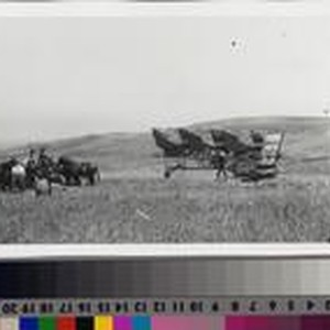 Farmhands with mule-team, wagons and threshing machine on the Phillips Ranch, Rolling ...