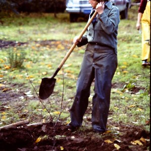 Planting plum trees at The Luther Burbank Gold Ridge Experiment Farm Cottage, ...