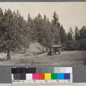 Road through yellow pine forest between Bartlett Springs and Upper Lake in ...