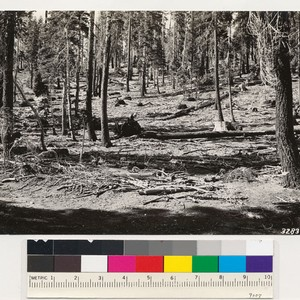Head of Alder Creek. Selectively logged red fir stands (Gov't land) with ...